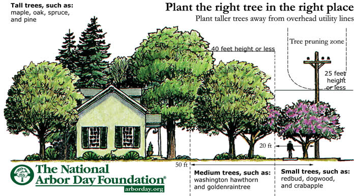 Right Tree Right Place Diagram