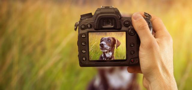Enter EPUD's Calendar Photo Contest!