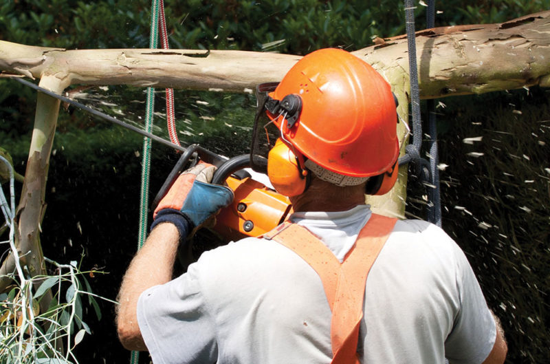 professional tree trimmer cutting branches