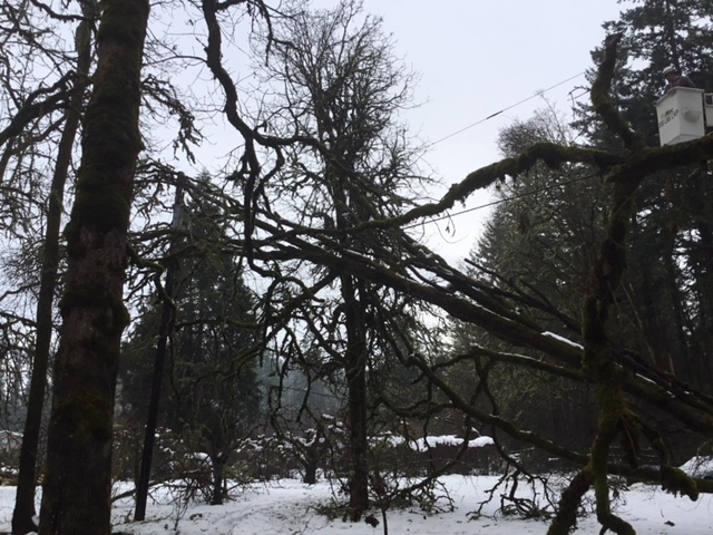 Damage to power pole
