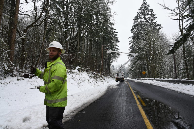 Tree Crew works on restoration efforts