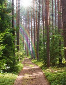 path through forest