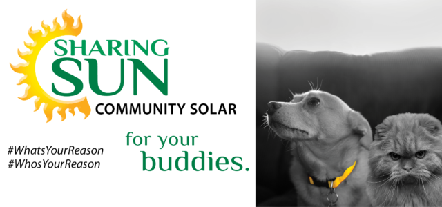 Who's Your Reason - your buddies. Sharing Sun with photo of a dog and cat.