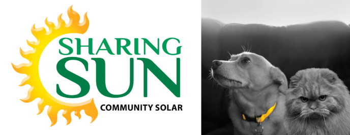 What's Your Reason for Sharing Sun -- a dog and cat photo