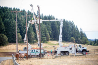 Linemen in bucket trucks working on power poles near a forest with horses nearby