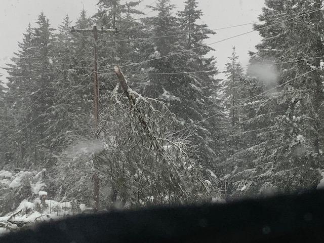 Fallen tree on power lines