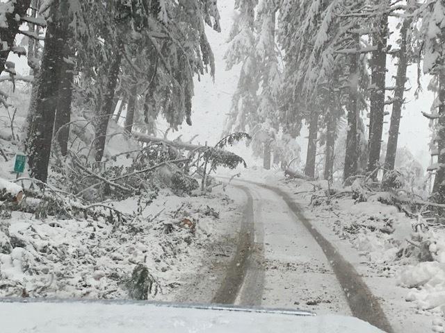power pole fallen over in snowstorm